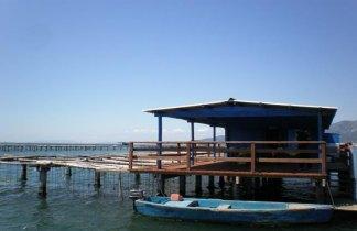 Arroz,Cava y Ostras : Delta del Ebro