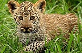 Tanzania: Safari Marafiki con Zanzíbar