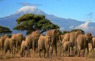 Memorias de Africa: Clásico & Confort