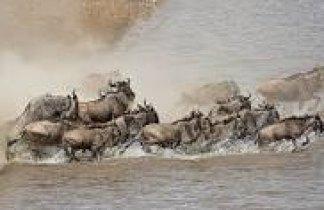 Tanzania. El Gran Espectáculo de la Migración