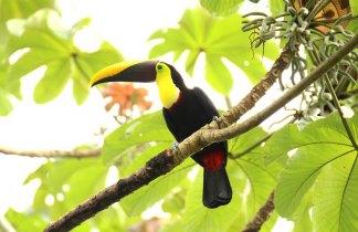 Costa Rica en Esencia. Viaje Singles