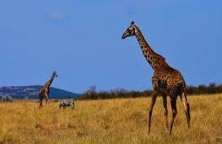 Tanzania Confort en 4 x 4