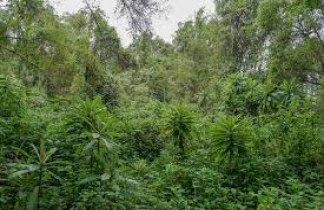 Gorila Trek Clásico. Uganda y Rwanda
