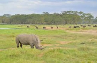 Memorias de Africa Experience. Kenya, Tanzania y Zanzíbar,