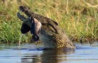 Gran Ruta del Okavango. Botswana- Cataratas Victoria