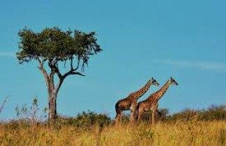 Memorias de Africa Aventura. Tanzania, Kenya y Zanzíbar
