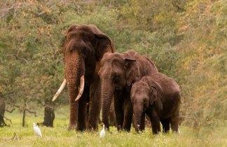 Sri Lanka. Naturaleza y Cultura en Semana Santa