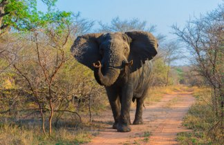 Ruta del Okavango Confort.  Sudáfrica- Namibia...